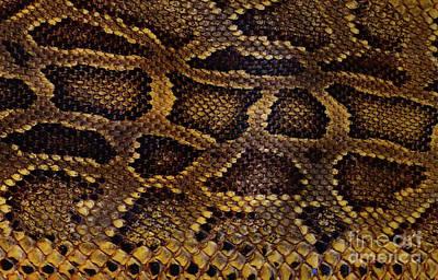 Photograph - Snake Skin by Kathy Baccari