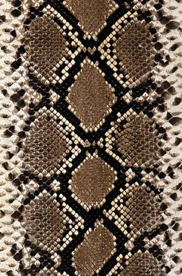 Snake Skin Art Print by Siede Preis