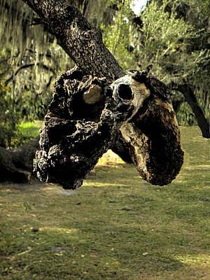 Photograph - Snake Tree  by Chris Mercer