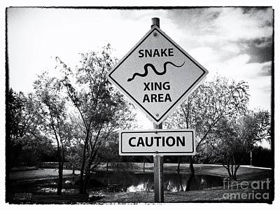Mellow Yellow Rights Managed Images - Snake Xing Area Royalty-Free Image by Gary Richards