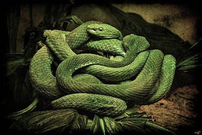 Photograph - Snakes Alive by Chris Lord