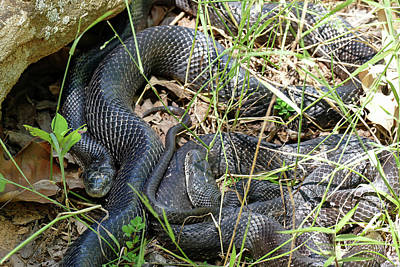 Photograph - Snakes In The Grass  by Bill Jordan