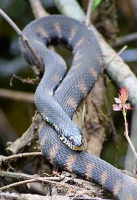 Photograph - Snakes In The Trees by Sheri McLeroy