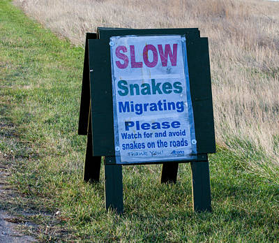 Photograph - Snakes Migrating Sign by Fran Riley