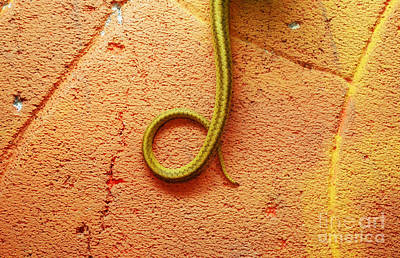 Selling Buying Online Photograph - Snake's Tail by Benny  Woodoo