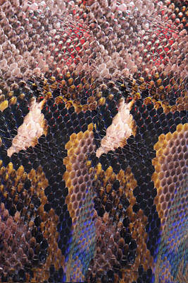 Photograph - Snakeskin Landscape by Tom Conway