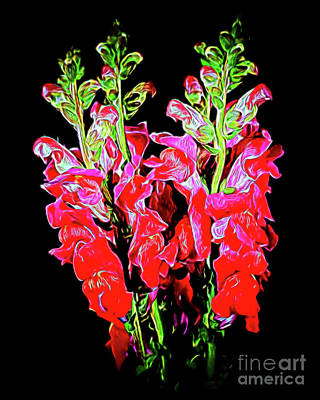 Photograph - Snapdragon 18-32 by Ray Shrewsberry