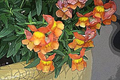 Photograph - Snapdragon In Crackle Pot by Donna G Smith