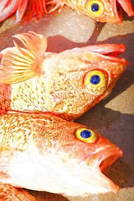 Photograph - Snapper Eyes by Alice Gipson