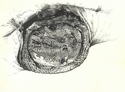 Drawing - Snapping Turtle by Marcus England