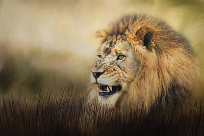Snarling Art Print by Jai Johnson