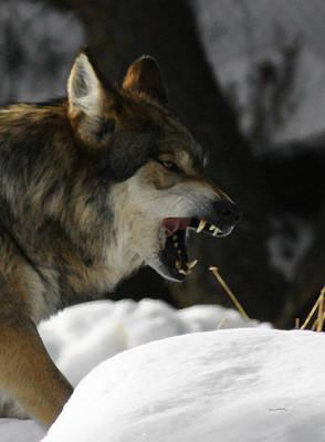 Snarling Wolf Art Print