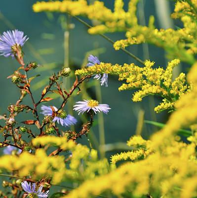 Photograph - Wild Flower Peek by JAMART Photography