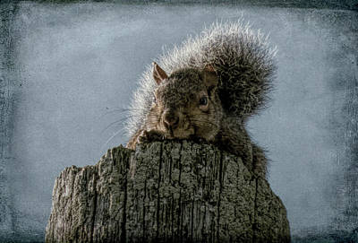 Photograph - Sneaking A Peek by Leslie Montgomery
