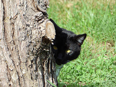 Photograph - Sneaky Cat by Leara Nicole Morris-Clark