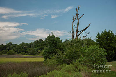 Photograph - Snee Farm Marsh View by Dale Powell