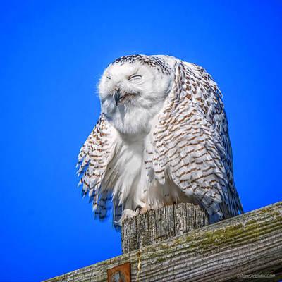 Photograph - Sneeze Snowy Owl  by LeeAnn McLaneGoetz McLaneGoetzStudioLLCcom
