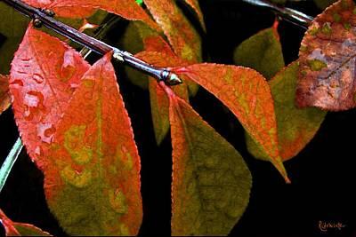 Burning Bush Digital Art - Snippet Of Fall by RC DeWinter