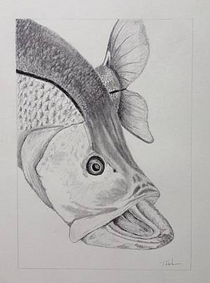 Snook Art Print by Tony Holm