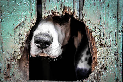 Canines Digital Art - Snoop by Billy Soden