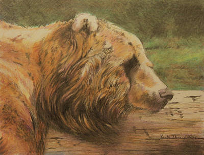 Brown Bear Drawing - Snooze by Keith Thompson