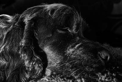 Photograph - Snoozing by Kathryn Bell
