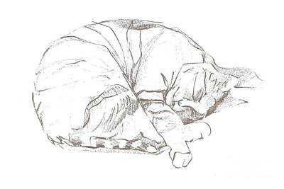 Drawing - Snoozing Kitty by Denise Fulmer