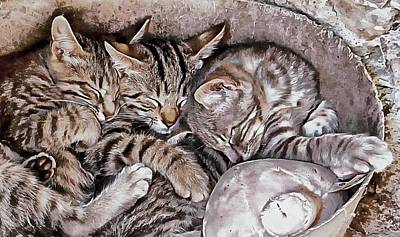 Photograph - Snoring Purrs Of Kitten Brothers by Dorothy Berry-Lound