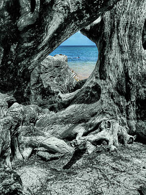 Photograph - Snorkling In The Knothole by Gordon Engebretson
