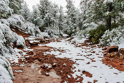 Photograph - Snow 06-053 by Scott McAllister