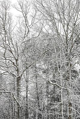 Photograph - Snow 20180312 5515vt by Doug Berry