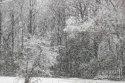 Photograph - Snow 20180312 5518t by Doug Berry