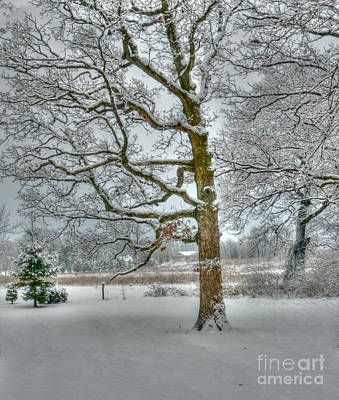 Photograph - Snow Among The Oaks by David Bearden
