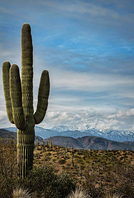 Photograph - Snow Amongst The Saguaro  by Saija Lehtonen