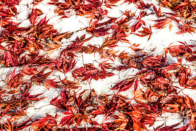 Photograph - Snow And Autumn Mix 1595t by Doug Berry