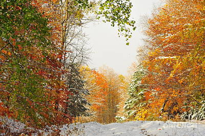 Forest Photograph - Snow And Autumn by Terri Gostola