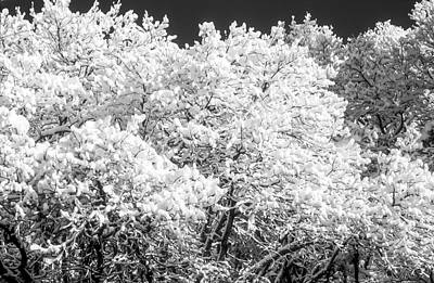 Photograph - Snow And Frost On Trees In Winter by John Brink