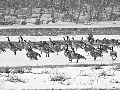 Photograph - Snow And Geese On The River II by Kathy M Krause