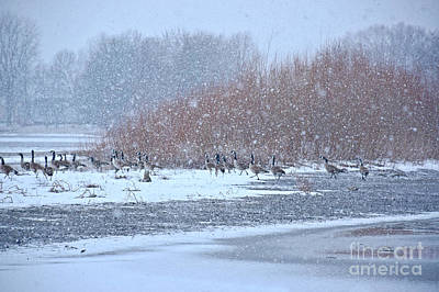 Photograph - Snow And Geese On The River by Kathy M Krause