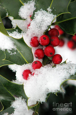 Photograph - Snow And Holly by Frank Townsley