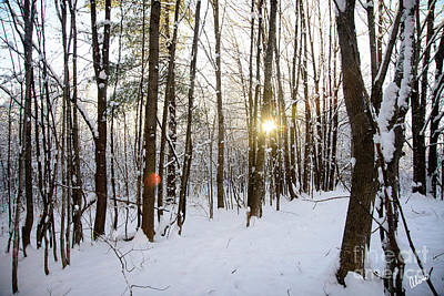 Photograph - Snow And Trees by Alana Ranney