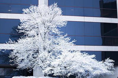 Photograph - Snow Art by Ronald Hoehn
