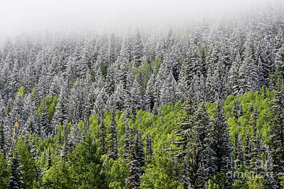 Photograph - Snow - Aspen - Pine - Winter Fog - Wasatch Mountains by Gary Whitton