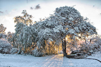 Photograph - Snow At Sunrise 1 by Peter Dyke