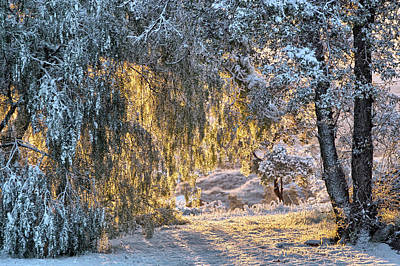 Photograph - Snow At Sunrise 2 by Peter Dyke