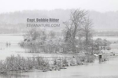 Photograph - Snow Bay 4606 by Captain Debbie Ritter