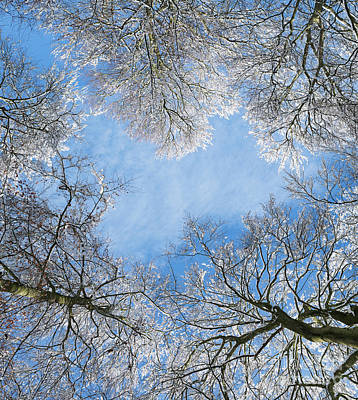Photograph - Snow Beeches by Tim Gainey