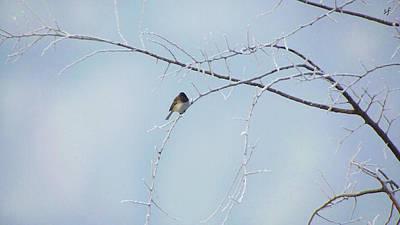 Digital Art - Snow Bird, A Finch In Winter by Shelli Fitzpatrick