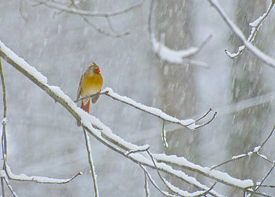 Photograph - Snow Bird by Gwendolyn Christopher