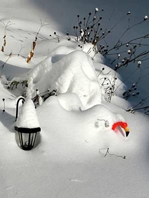 Photograph - Snow Bird by Jennifer Wheatley Wolf